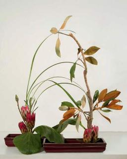 magnolia-protea ikebana in 2 containers