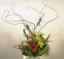 curly willow, sweeping flaxx, leucadendron, greem cymbidium and red dramatize this design d