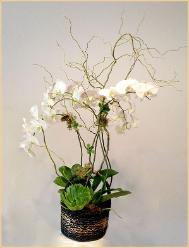 Orchid basket with succulents in between branches