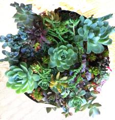 Succulents mixed in the round