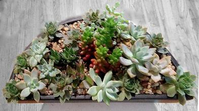 Mixed succulents in halfround ceramic holder